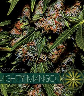 Mighty Mango Bud by Vision Seeds