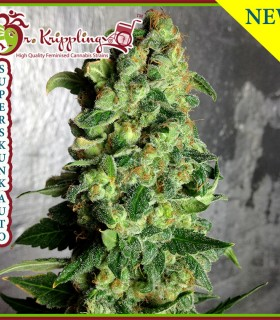 Super Skunk Auto by Dr Krippling