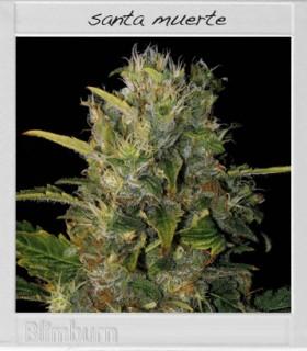 Santa Muerte by Blimburn Seeds