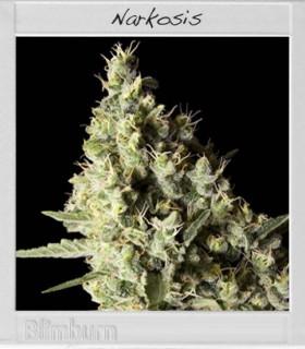 Narkosis by Blimburn Seeds