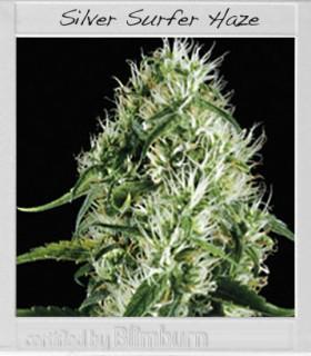 Silversurfer Haze by Blimburn Seeds