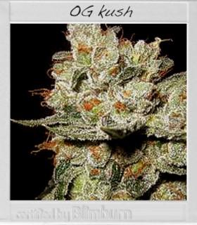 OG's Kush by Blimburn Seeds