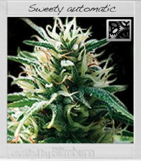Sweety Automatic by Blimburn Seeds