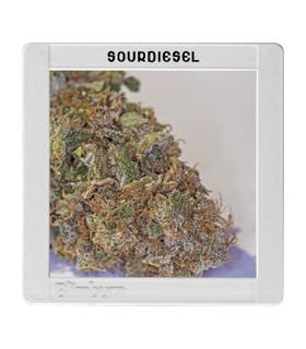 Sour Diesel by Blimburn Seeds