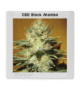 Mamba Negra CBD by Blimburn Seeds