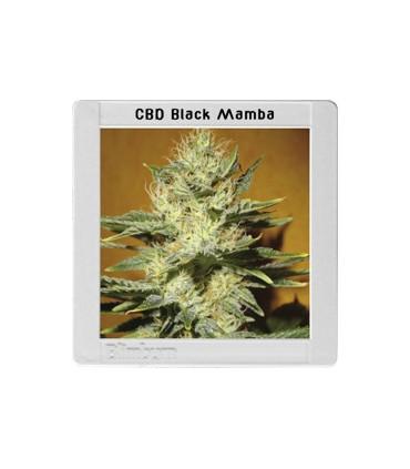 Mamba Negra CBD