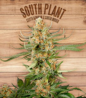 South Plant by The Plant Organics Seeds