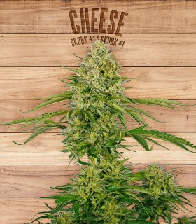 Cheese by The Plant Organics Seeds
