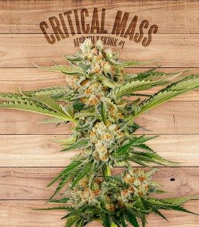 Critical Mass by The Plant Organics Seeds