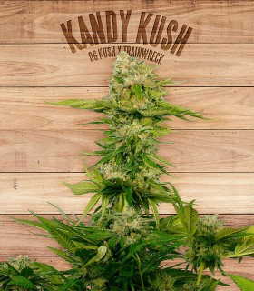Kandy Kush by The Plant Organics Seeds