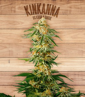 Kinkanna by The Plant Organics Seeds