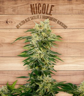 Nicole by The Plant Organics Seeds