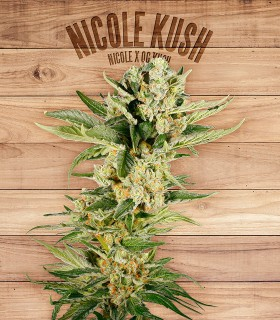Nicole Kush by The Plant Organics Seeds