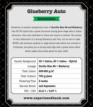 Glueberry Auto