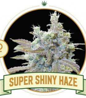 Super Shiny Haze
