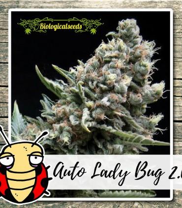 Auto Lady Bug 2.0