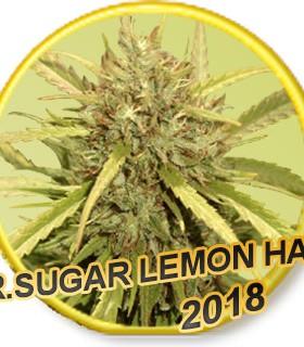Mr. Sugar Lemon Haze