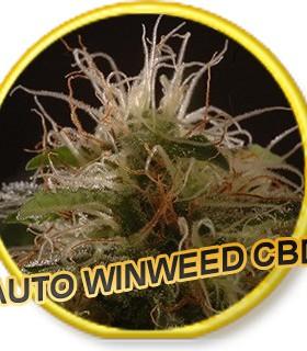 Auto Winweed CBD