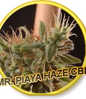 Piaya Haze CBD