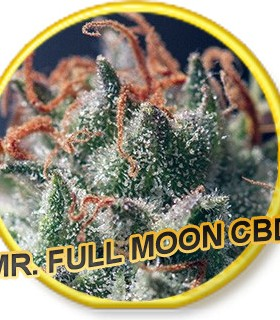 Full Moon CBD