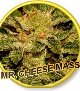 Mr. Cheese Mass
