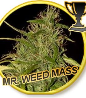 Mr. Sweet Mass