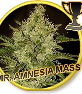 Mr. Amnesia Mass