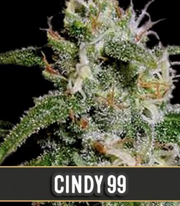 Cindy's 99