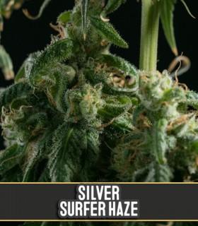 Silversurfer Haze