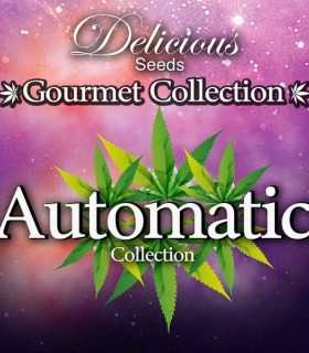 Automatic Gourmet Collection 2 by Delicious Seeds
