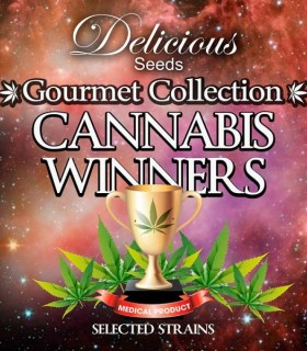 Winner Gourmet Colletion 2 by Delicious Seeds