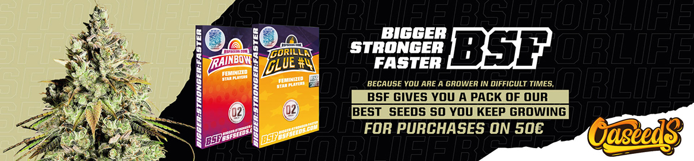 BSF Promo