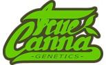 True Canna Genetics
